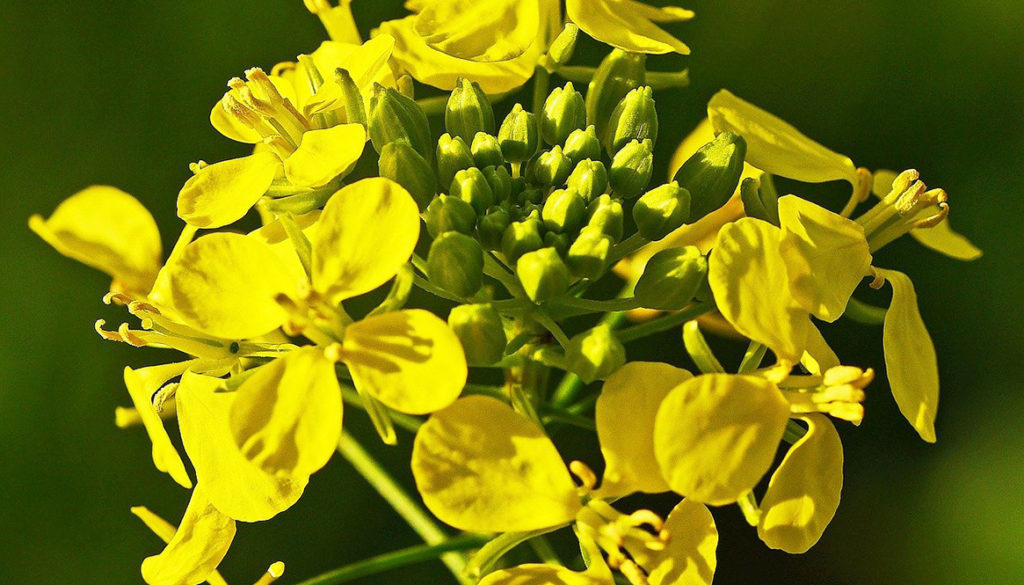 Mustard voor levenslust | Bach